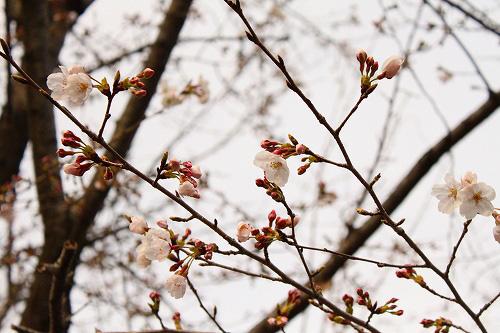 桜がチラリ☆