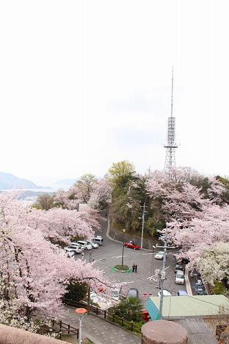 最後の桜~