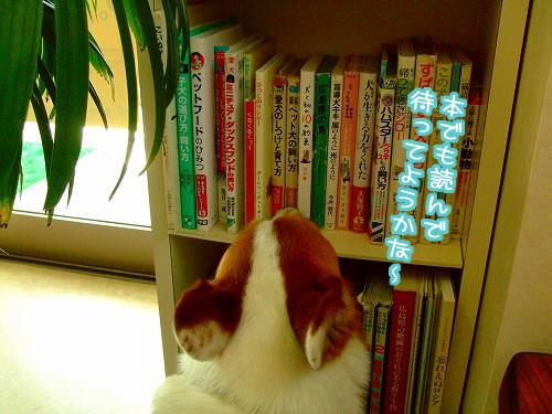 本でも読んで・・・