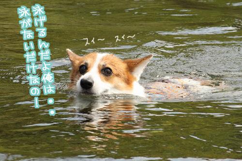 泳がないだけ!