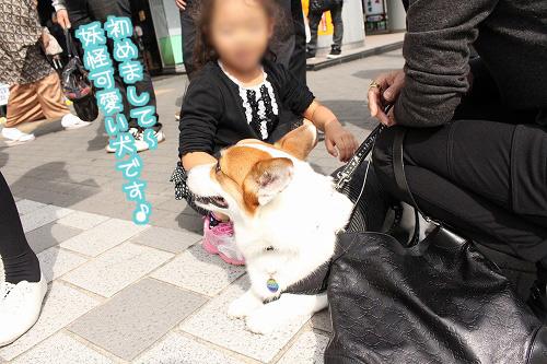 妖怪可愛い犬?