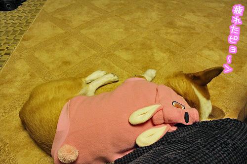 疲れたピョン