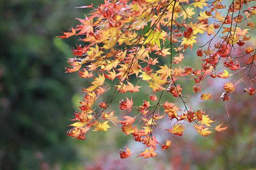 紅葉がキレイ♪