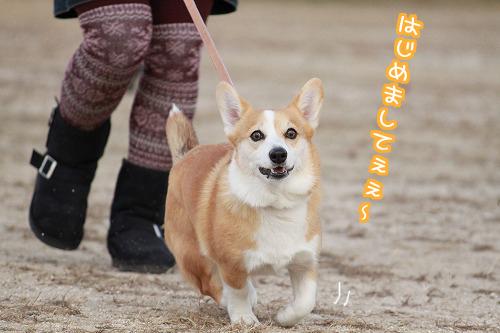 初めまして~☆