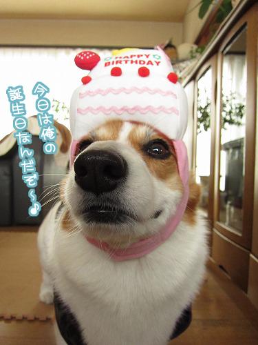 今日は俺の誕生日~