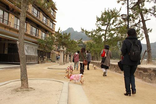 宮島をねり歩くコギズ