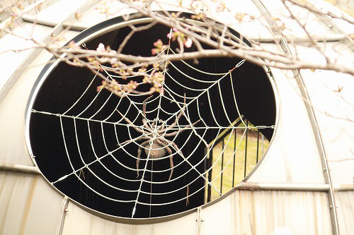 巨大な蜘蛛さん