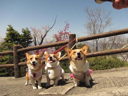 桜をバックに~☆