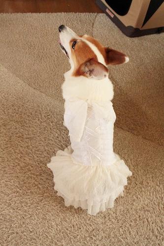 ウェディングドレス☆