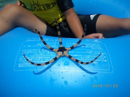 沖縄家族旅行2010 ナガンヌ島 033