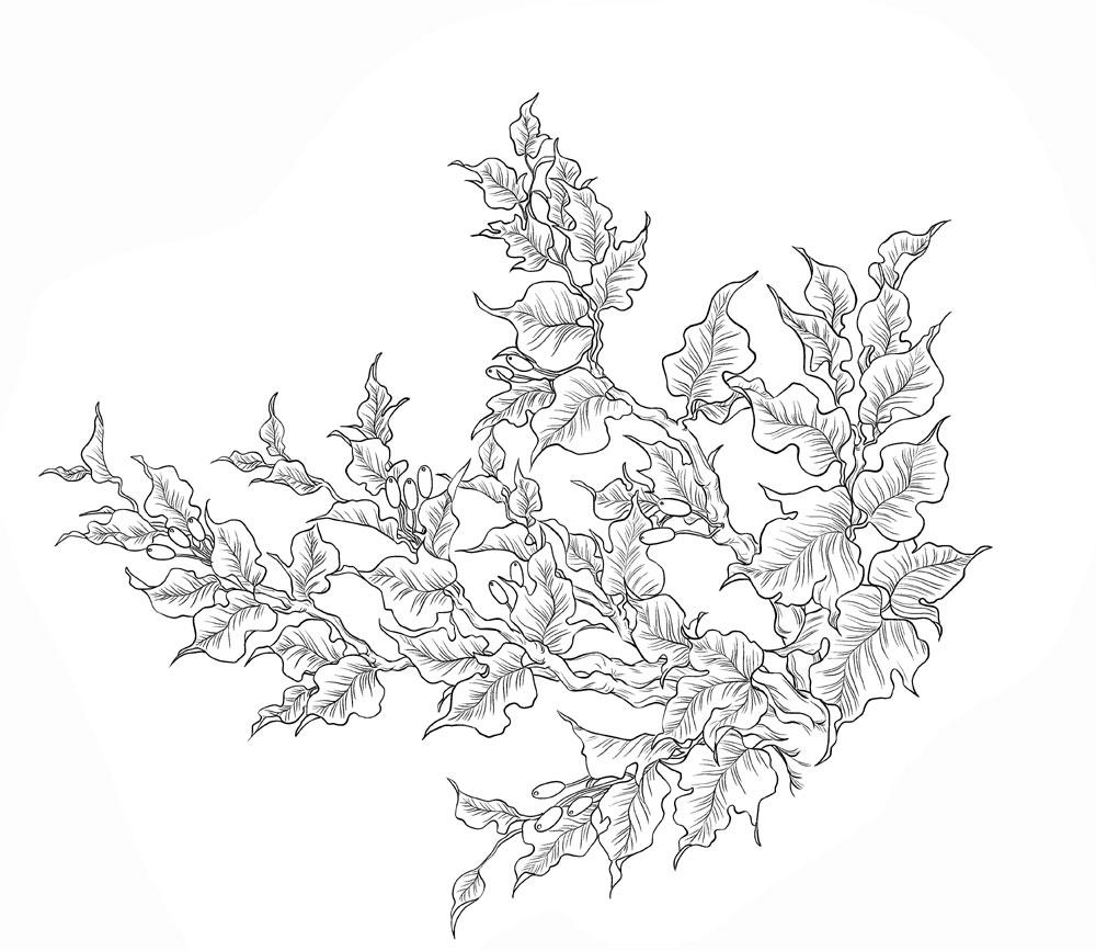 手描き葉大1