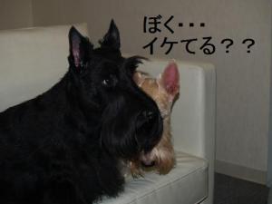 ♪ぼく・・・イケてる??♪