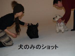 ♪犬のみのショットも・・・♪