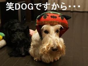 ♪笑DOGですから・・・♪