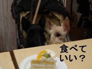 食べていい??