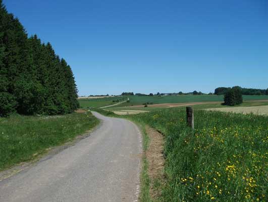 田舎道なのに国道