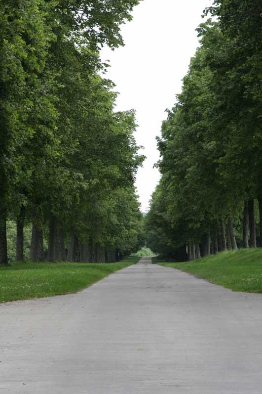 モダーヴ城の並木道