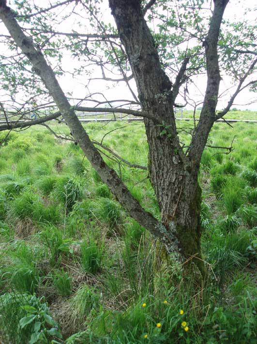 オートファーニュ湿原
