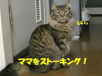 kansatsu_musashi