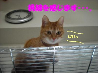 kansatsu_sakura.jpg
