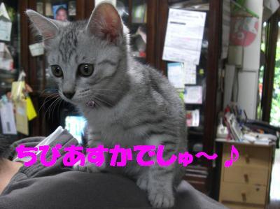 koneko_asuka