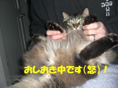oshioki_musashi