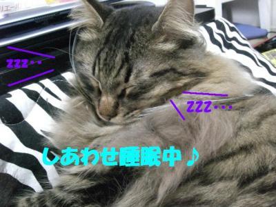 sleep_musashi
