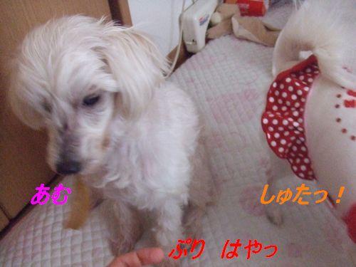 2009_0221ブログ0010