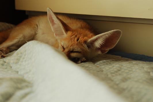 やっぱり寝るわ!