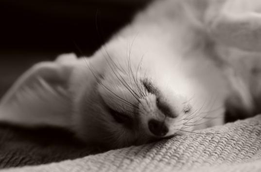 どんな態勢で寝てるの!