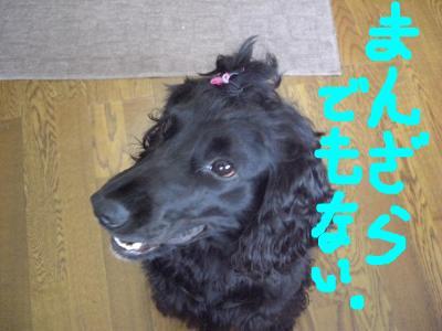 snap_saisaizzz123_200913134624.jpg