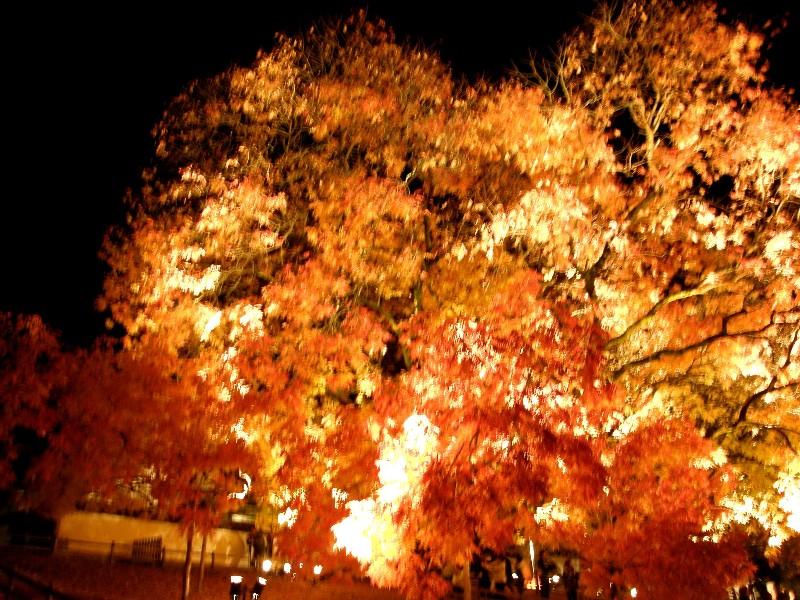 旧閑谷学校 ライトアップ 楷の木