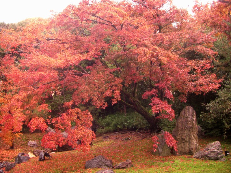 京都市 宝厳院の庭園