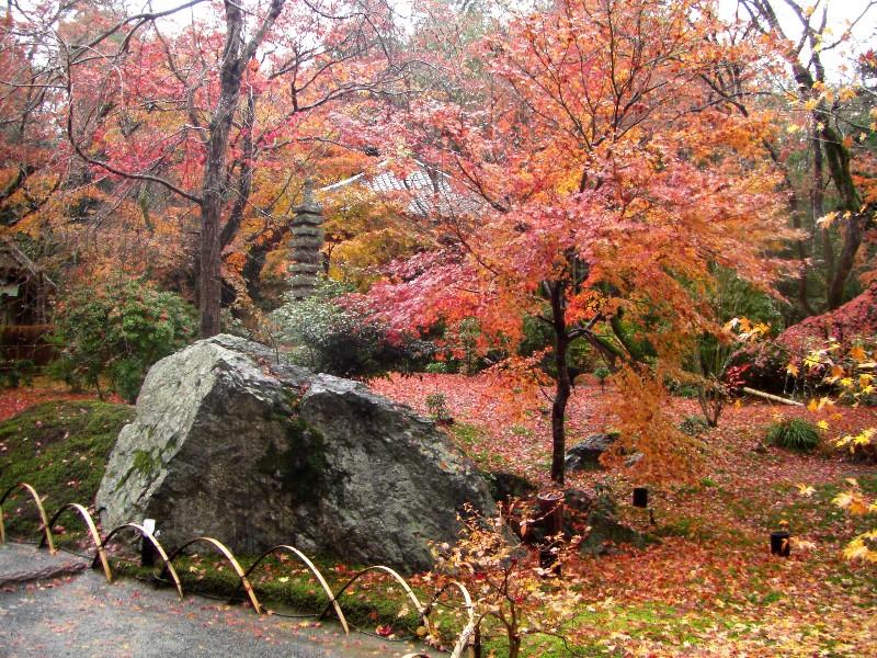京都 宝厳院の庭園
