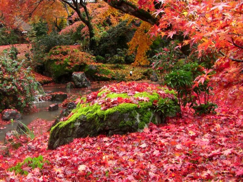 京都 宝厳院 庭園