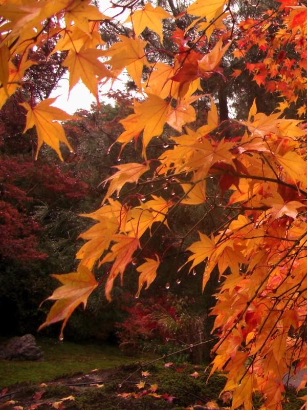 京都市 宝厳院
