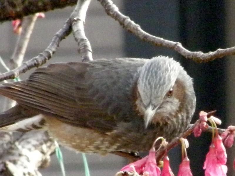 春の便りと鳥