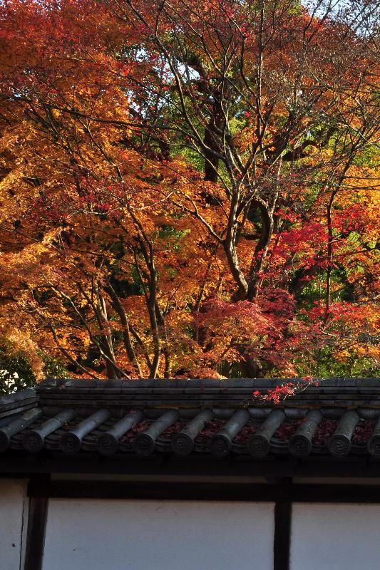 京都市左京区 南禅寺 紅葉