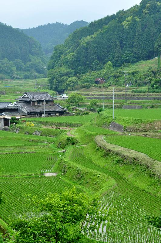 山村の風景 6月 桜三里