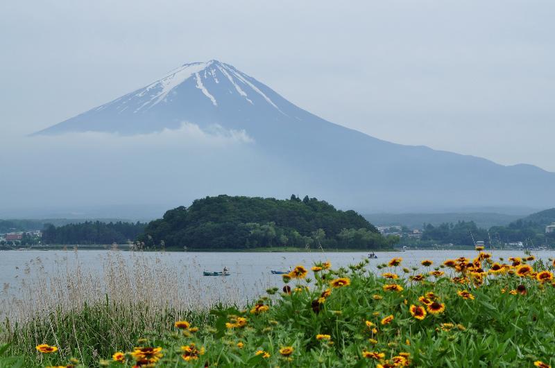河口湖 ハーブフェスティバル 富士山