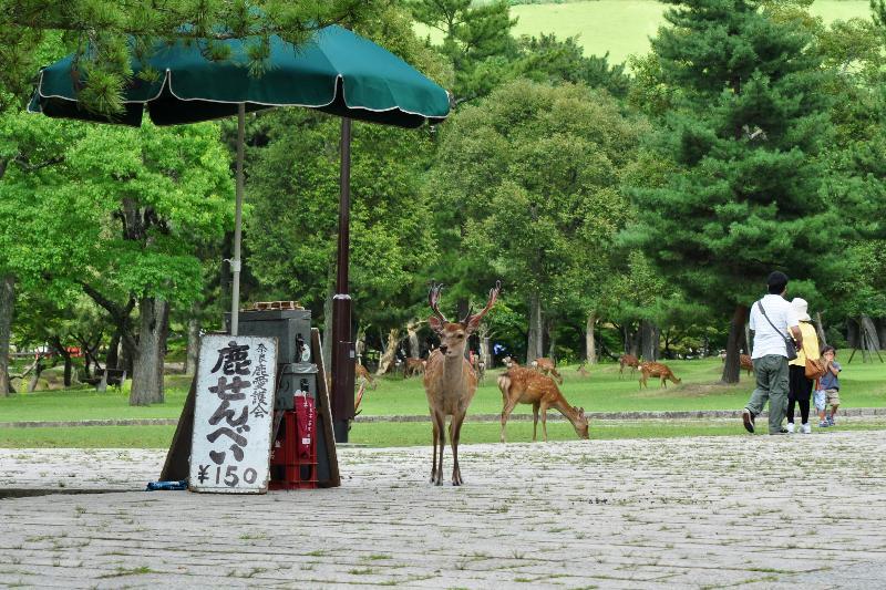 奈良県立都市公園奈良公園