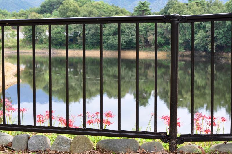 香川県 讃岐まんのう公園 秋の風景