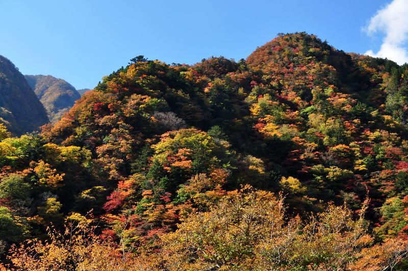 徳島県 高の瀬峡 紅葉