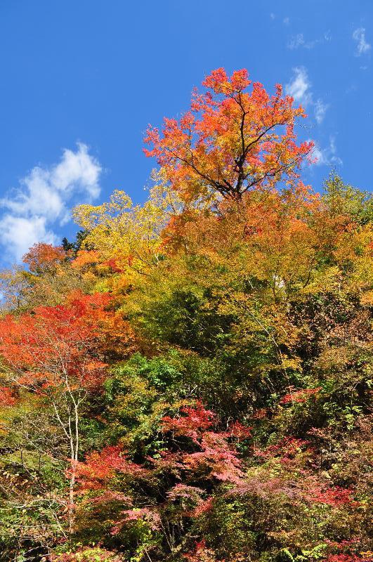 徳島県 紅葉の名所 高の瀬峡