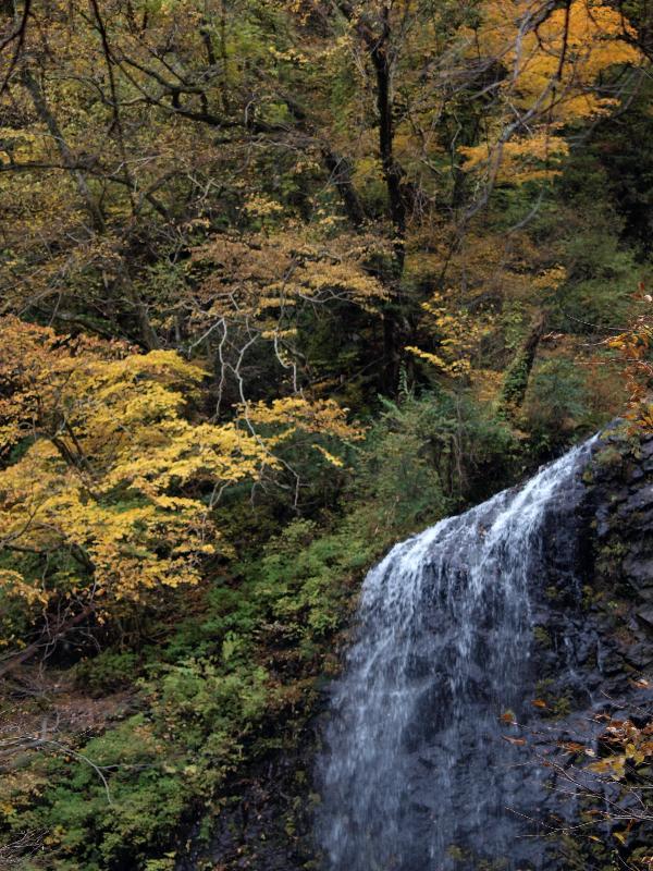 東温市河之内  白猪の滝  紅葉
