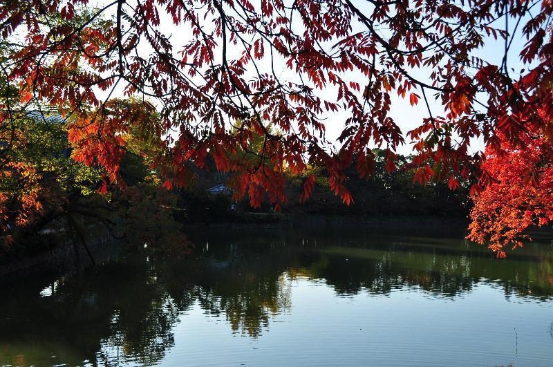 新居浜市 広瀬公園 紅葉