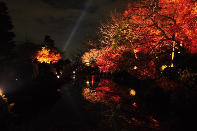 京都市 清水寺 ライトアップ