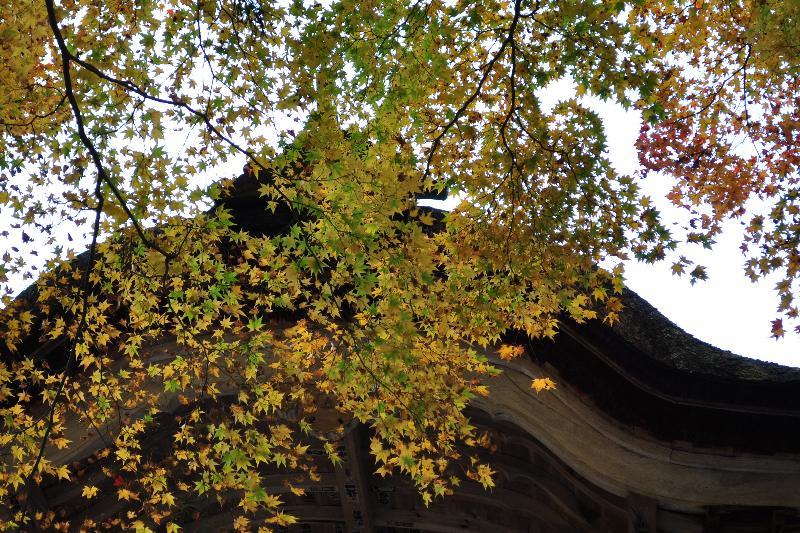 湖東三山 百済寺 紅葉