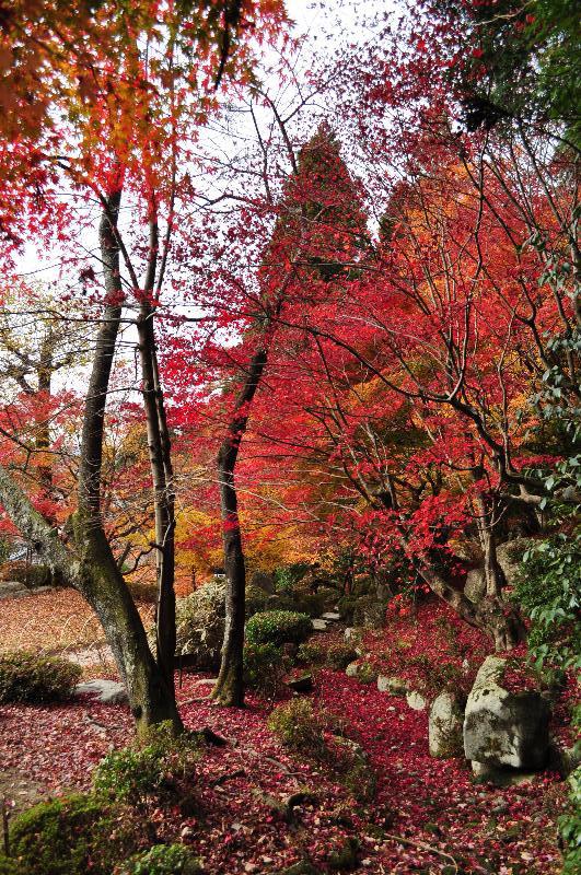 滋賀県東近江市 百済寺