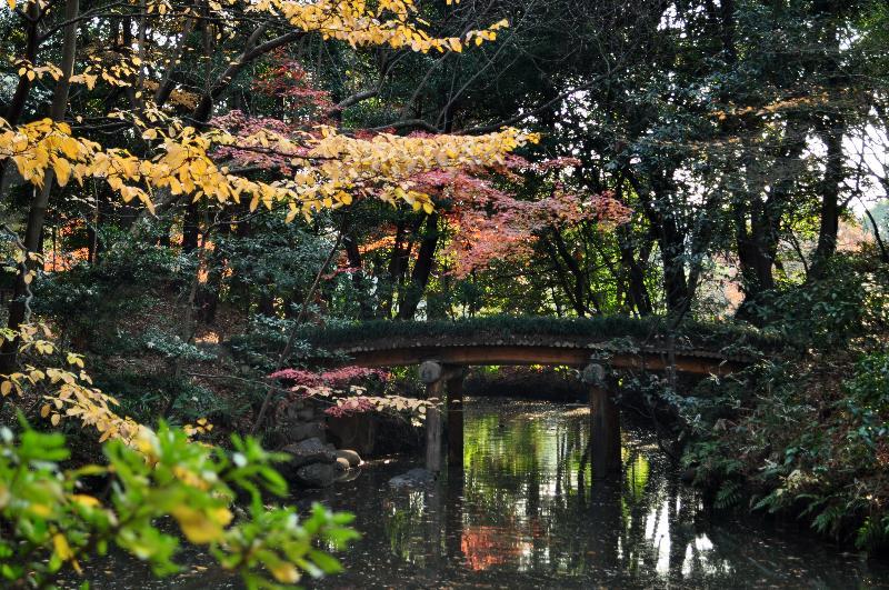 文京区本駒込 庭園 六義園 紅葉